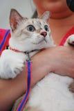 Gato dado una sacudida eléctrica Imagenes de archivo