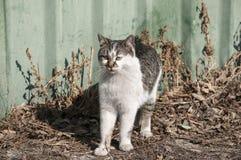 Gato de aleia Foto de Stock Royalty Free