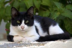 Gato de aleia na Creta, Grécia foto de stock royalty free