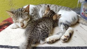 Gato de alimentación Imagenes de archivo