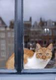 Gato de Amsterdam Fotos de archivo libres de regalías