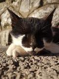 Gato de Anonymus Fotos de archivo libres de regalías