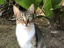 Gato de gato atigrado asustado con los ojos abiertos del gatito imagen de archivo libre de regalías