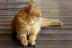 Gato de gato atigrado del jengibre que se acuesta en perfil Imagen de archivo