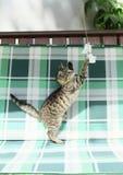 Gato de gato atigrado - gatito juguetón fotografía de archivo