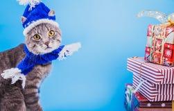 Gato de gato atigrado gris que lleva el sombrero azul del Año Nuevo con la bufanda y rodeado con las cajas de regalo en fondo azu Fotografía de archivo libre de regalías