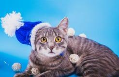 Gato de gato atigrado gris que lleva el sombrero azul del Año Nuevo y cubierto con una guirnalda en fondo azul Foto de archivo