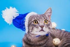 Gato de gato atigrado gris que lleva el sombrero azul del Año Nuevo y cubierto con una guirnalda en fondo azul Imagen de archivo