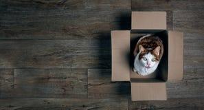 Gato de gato atigrado lindo en una caja de cartón que mira para arriba a la cámara fotografía de archivo