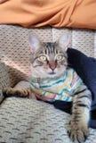 Gato de gato atigrado de los ojos verdes que sorprende fotografía de archivo