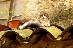 Gato de gato atigrado mullido en un tejado de teja Imágenes de archivo libres de regalías