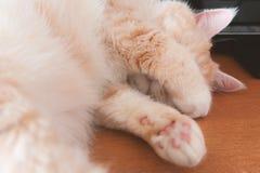 Gato de gato atigrado poner crema hermoso que duerme en la tabla que cubre su cara con sus patas fotos de archivo