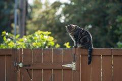Gato de gato atigrado que se sienta en la cerca foto de archivo libre de regalías
