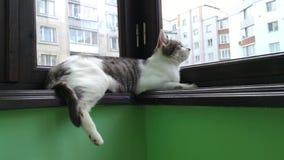 Gato de gato atigrado rayado gris que miente en el balcón metrajes