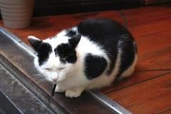 Gato de B/W dormido en el pórtico Fotografía de archivo