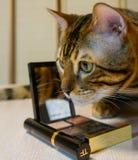 Gato de Bengal perto da paleta e da escova cosméticas foto de stock royalty free