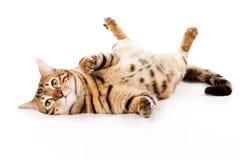 Gato de Bengala Fotografía de archivo