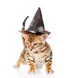 Gato de Bengala con el sombrero de la bruja Aislado en el fondo blanco Imagen de archivo libre de regalías