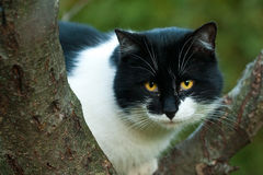 Gato de Black&White Imagen de archivo libre de regalías