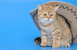 Gato de Brown en el sombrero Foto de archivo libre de regalías