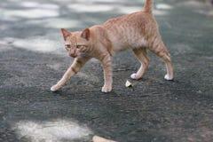 Gato de Brown en la calle Imagen de archivo libre de regalías