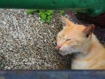 Gato de Brown que disfruta del baño del sol en Shifen Imágenes de archivo libres de regalías
