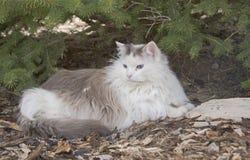 Gato de cabelos compridos sob a árvore verde fotografia de stock royalty free