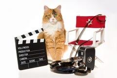 Gato de calicó con los apoyos de la película en el fondo blanco fotos de archivo libres de regalías