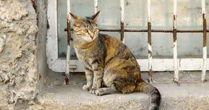 Gato de calicó que se sienta en alféizar delante de la rejilla del anti-vándalo almacen de metraje de vídeo