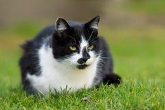 Gato de casa Imagen de archivo