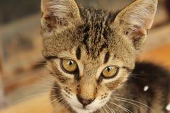 Gato de casa Fotografía de archivo