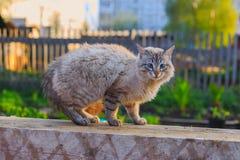 Gato de casa asustado Fotografía de archivo