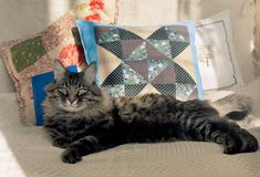 Gato de casa do Cosiness Imagem de Stock Royalty Free