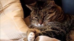 Gato de casa doce do gato malhado filme