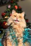 Gato de casa en el Año Nuevo Imagen de archivo libre de regalías