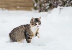 Gato de casa en la nieve Imagen de archivo