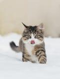 Gato de casa en la nieve Foto de archivo libre de regalías