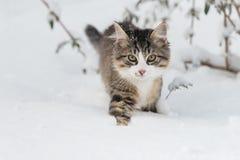 Gato de casa en la nieve Fotos de archivo libres de regalías