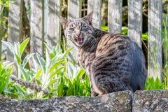 Gato de casa gris afuera Imagenes de archivo