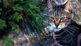 Gato de casa selvagem para fora no seu selvagem imagens de stock