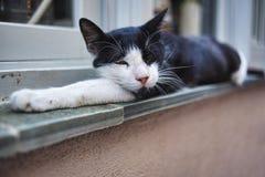 Gato de casa sonolento foto de stock