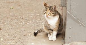 Gato de Cfkuco que senta-se na rua filme