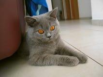 Gato de Cheshire Imagen de archivo libre de regalías