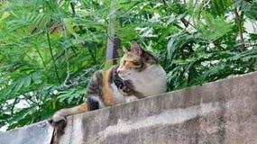 Gato de chita em uma parede Foto de Stock