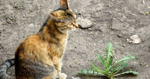 Gato de chita observador que senta-se na terra com planta video estoque