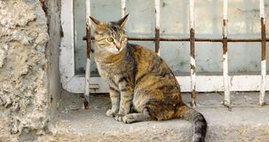 Gato de chita que senta-se na soleira na frente da grade do anti-vândalo vídeos de arquivo