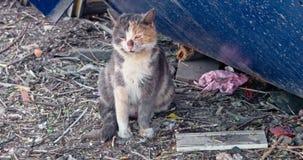 Gato de chita superior que respira pesadamente ao sentar-se na terra desarrumada filme