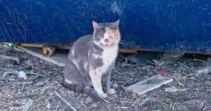 Gato de chita velho que senta-se no contentor azul próximo à terra desarrumado video estoque