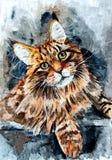 Gato de Coon macio de Maine Retrato Aquarela molhada de pintura no papel Arte ingénua Aquarela do desenho no papel ilustração do vetor
