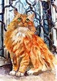 Gato de Coon macio de Maine Retrato Aquarela molhada de pintura no papel Arte ingénua Aquarela do desenho no papel ilustração royalty free